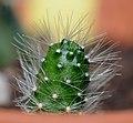 2011-07-21-cactaceae-1.jpg
