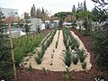 2012-12-04 Stormwater Bio-Treatment Area.jpg