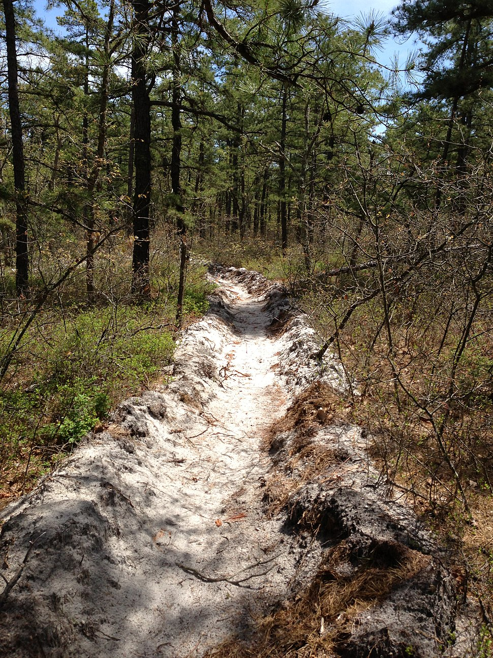 2013-05-10 12 18 27 Freshly dug fire break along the Mount Misery Trail in Brendan T. Byrne State Forest