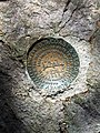 2017-05-16 10 52 25 U.S. Coast and Geodetic Survey reference mark on the summit of Mount Rogers within the Lewis Fork Wilderness, along the border of Grayson County and Smyth County, Virginia.jpg