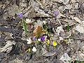 2018-03-15 (100) Nature at Haltgraben in Frankenfels.jpg