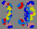 3D structure of secretory IgA1.png