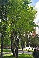 46-101-5041 Lviv Bandery 12 Magnolia RB 18.jpg