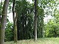 615954 pow krakowski gm Liszki Piekary park 01.JPG