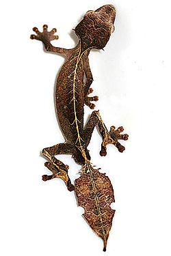 5. Satanic Leaf Tailed Gecko