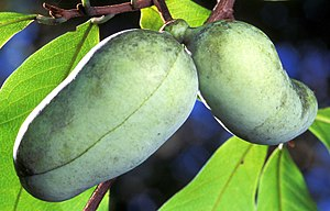 two pawpaws