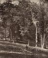 A Beechen Slope Knole by Stephen Thompson 1875.jpg