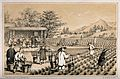 A Chinese tea plantation with workers watering, picking and Wellcome V0019220.jpg