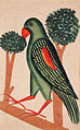 A Parrot (6125147594).jpg