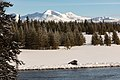 A bison rests along the Madison River with Mt. Holmes in the distance (32341316857).jpg