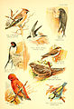 A book of birds (Plate XXI) (6022267972).jpg