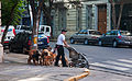 A common occupation in Recoleta, Buenos Aires, 30th. Dec. 2010 - Flickr - PhillipC.jpg