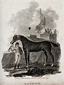 A jockey holding a race horse by its reins. Line engraving b Wellcome V0020734.jpg