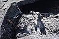 A penguin, a crab and an iguana (walk into a bar ...) (47779272931).jpg