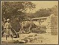 A water wheel in Egypt - Niblo Photo. LCCN2004674231.jpg