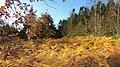 Aboretet i efteråret - panoramio.jpg