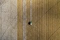 Aerial view of cotton harvester making vertical stripes in Batesville, Texas cotton field.jpg