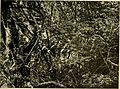 African invertebrates - a journal of biodiversity research (1909-1916) (17324177303).jpg