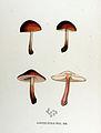 Agaricus ustalis — Flora Batava — Volume v17.jpg