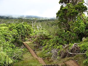 Hawaiian tropical rainforests - Kaua{{okina}}i's Alaka{{okina}}i Wilderness Preserve