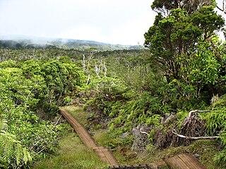 Hawaiian tropical rainforests