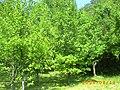 Alberelli di Prugne - panoramio.jpg