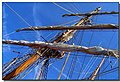 Alberi al porto Antico - panoramio.jpg
