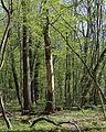 Allacher-Forst Muenchen-21.jpg