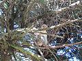 Alsazia montagne des singes 4.JPG