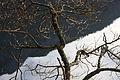 Altausseer See 78900 2014-11-15.JPG