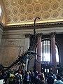 American Museum of Natural History - New York - USA - panoramio.jpg