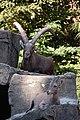 Amsterdam Zoo (3799381900).jpg