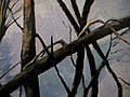 "Amy Feger, ""Panorama at Ebeneezer Swamp""oil on canvas (detail) 4 (3620128450).jpg"