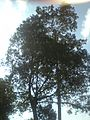 Andaman 11.jpg