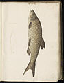 Animal drawings collected by Felix Platter, p1 - (166).jpg