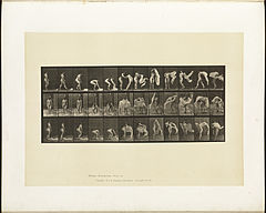 Animal locomotion. Plate 419 (Boston Public Library).jpg