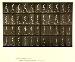 Animal locomotion. Plate 489 (Boston Public Library).jpg