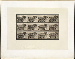 Animal locomotion. Plate 563 (Boston Public Library).jpg
