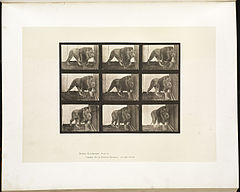 Animal locomotion. Plate 721 (Boston Public Library).jpg