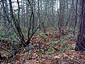Another WW1 trench, Sherwood Pines Forest Park - geograph.org.uk - 87491.jpg