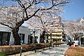 Aoyama Cemetery1b.jpg