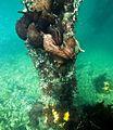 Aplysia californica, cópula en grupo.jpg
