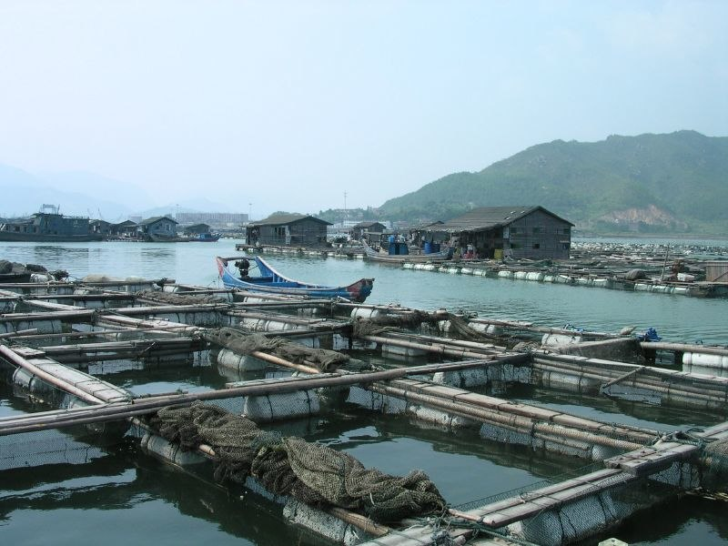 Aquaculture in Lo-nguong