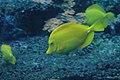 Aquarium (4476710125).jpg