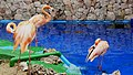 Aquarium - Curaçao (14149463691).jpg