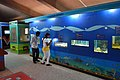 Aquarium Corner - Life Science Gallery - Digha Science Centre - New Digha - East Midnapore 2015-05-02 9490.JPG