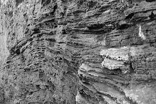 calcareous sandy sedimentary rock