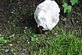 Arion vulgaris mit Calvatia gigantea CS4.jpg