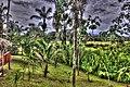 Arrowpoint Etay Trees - panoramio.jpg