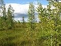 Asinovsky District, Tomsk Oblast, Russia - panoramio (118).jpg